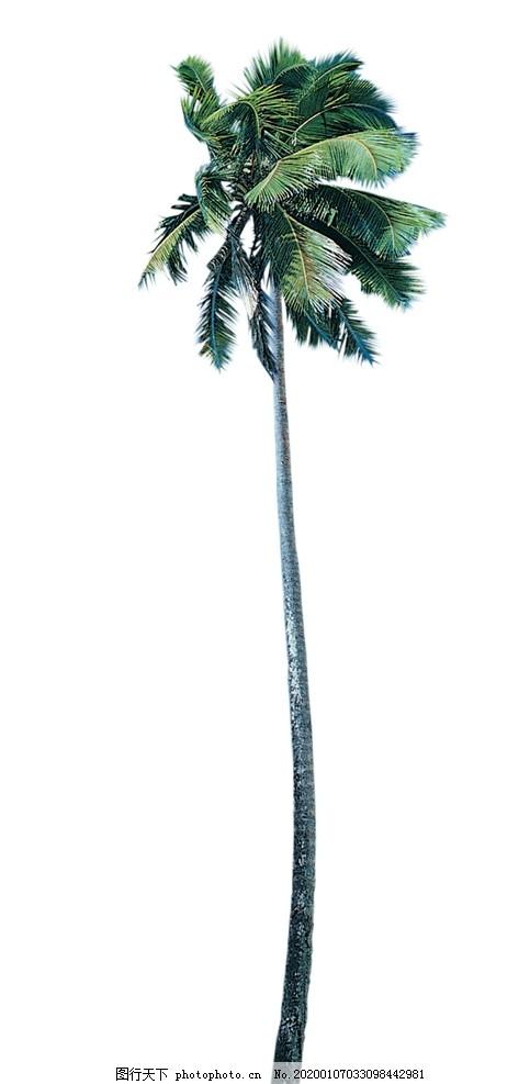 椰子树讲座机械v讲座素材心得体会图片